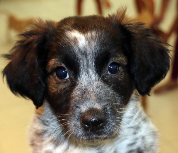 Bessie (pending adoption)