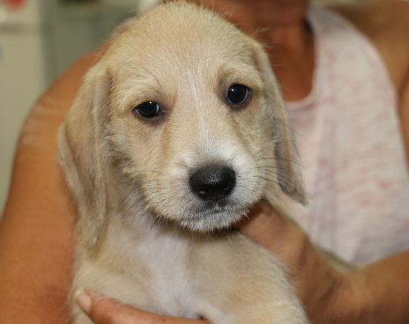 Mack (pending adoption)