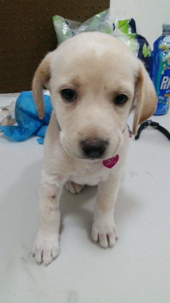 Heidi (pending adoption)