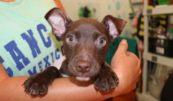 Islabella (pending adoption)