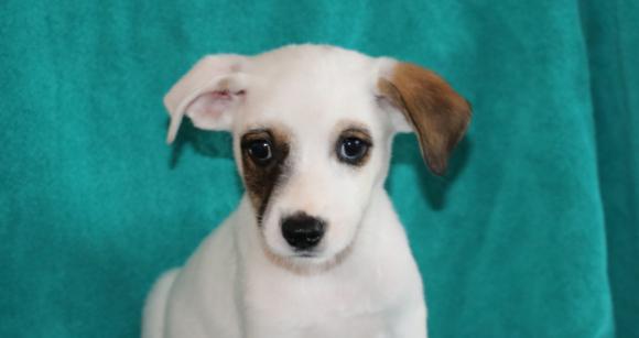 Petey (pending adoption)