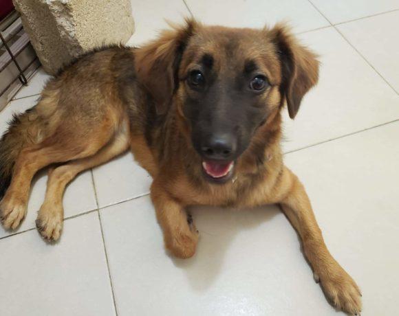 Eliza (pending adoption)