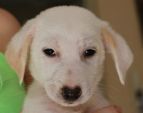 Wilma (pending adoption)