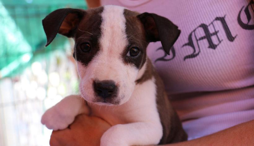 Dixie (pending adoption)