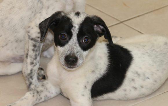 Claude (pending adoption)