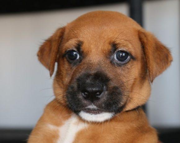Bonito (pending adoption)