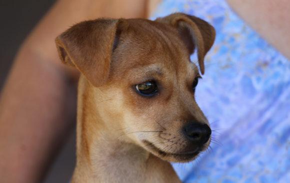 Gio (pending adoption)