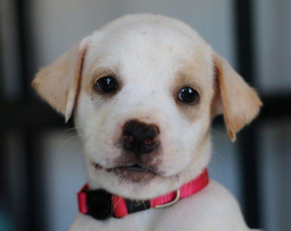 Luz (pending adoption)