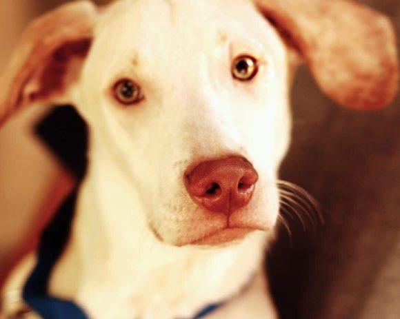 Oliver (pending adoption)