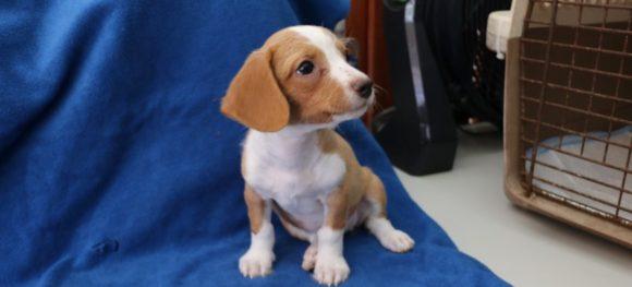 Claire (pending adoption)