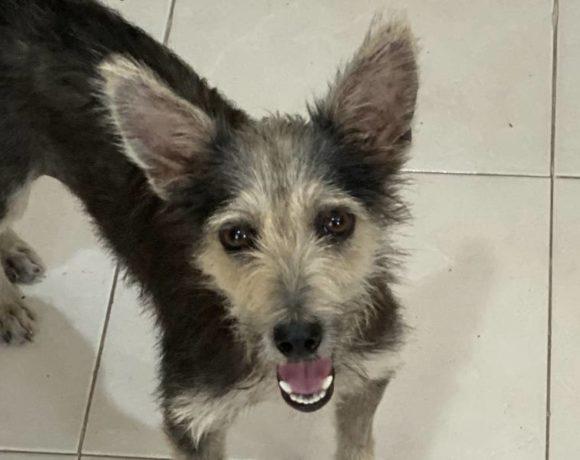 Foxy (pending adoption)