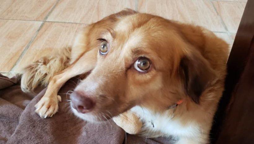 Mimi (pending adoption)